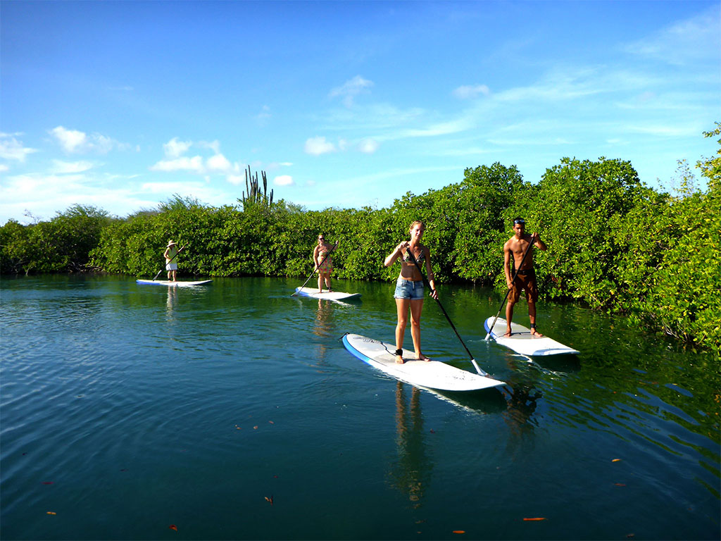 Paddleboarding Spanish Waters Mangrove ECO Tour